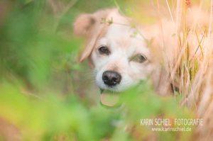 Fotograf Stuttgart Hochzeit Hochzeitsfotograf Tierfotografie Hund