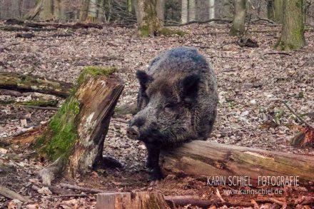 Fotografin Stuttgart Tierfotograf Tiere