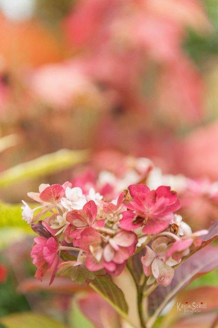Garten - Einen Baum pflanzen